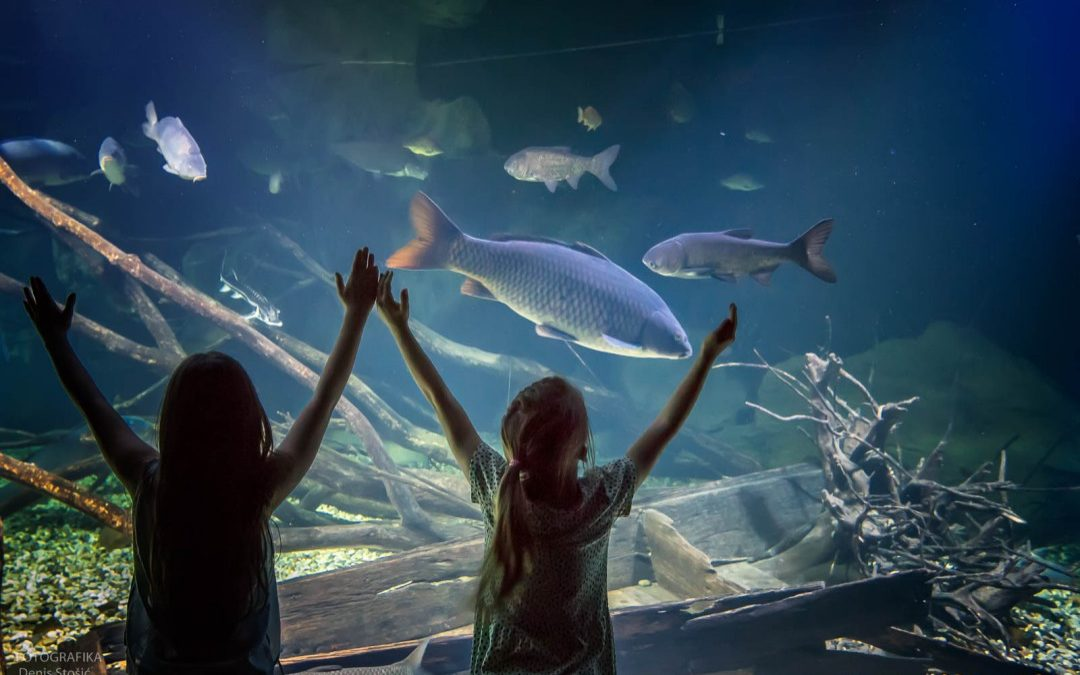 Aquatika – slatkovodni akvarij Karlovac
