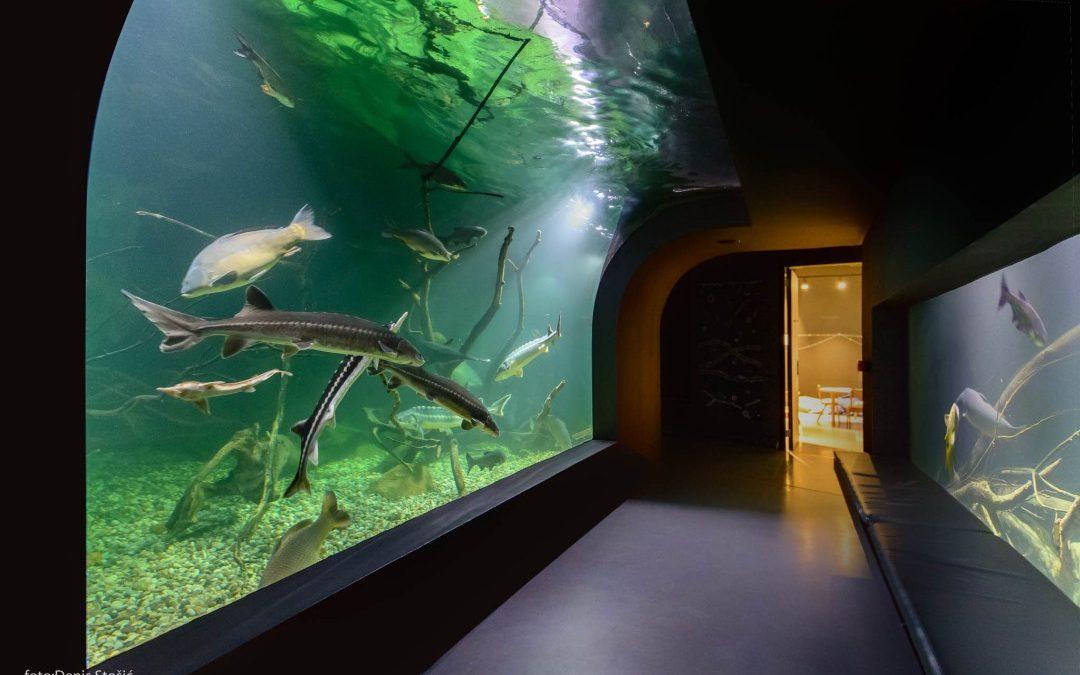 Aquatika, Gradski muzej Karlovac i Gradska knjižnica počinju s radom