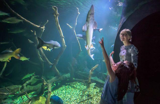 Aquatika slatkovodni akvarij Karlovac